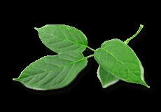 Диабекон (Diabecon) Himalaya 60 таблеток