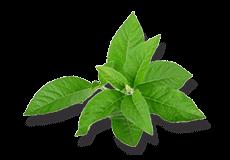 Бресол (Bresol) Himalaya 60 таблеток