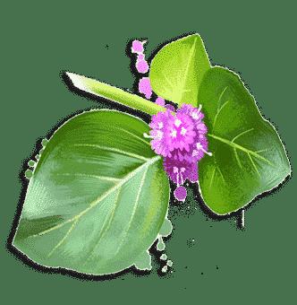 Пунарнава (Punarnava) Himalaya 60 таблеток